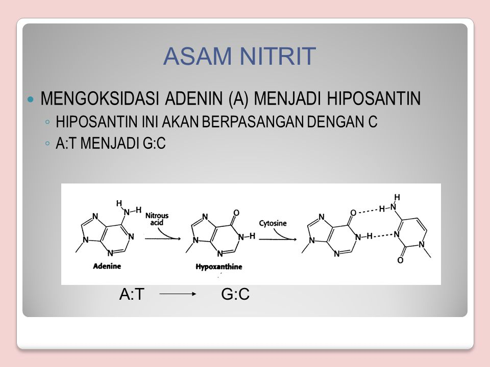 ASAM NITRIT MENGOKSIDASI ADENIN (A) MENJADI HIPOSANTIN