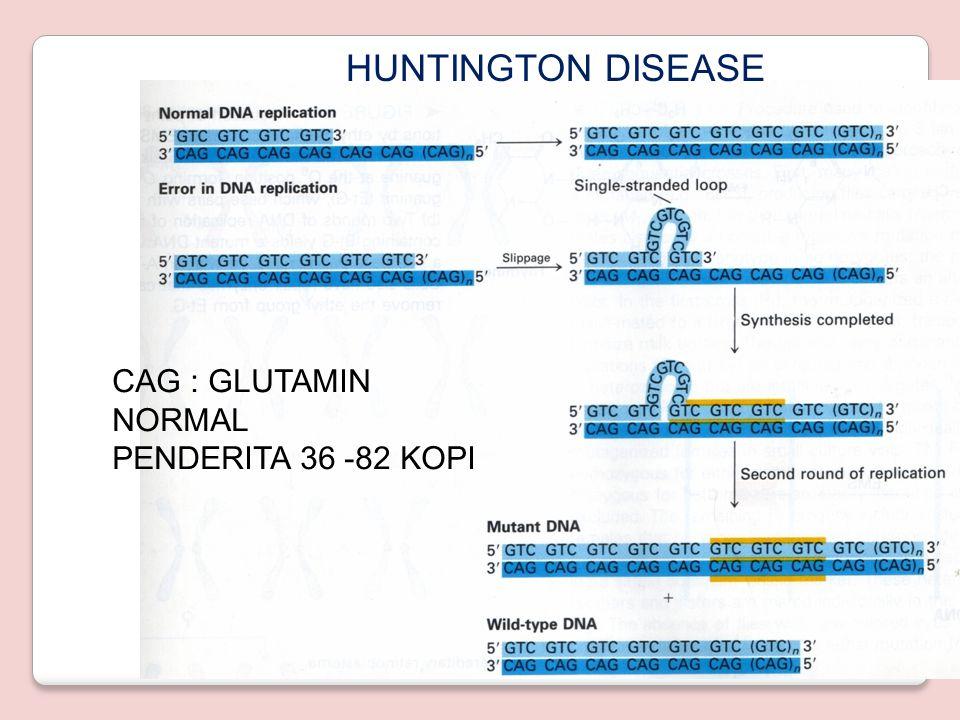 HUNTINGTON DISEASE CAG : GLUTAMIN NORMAL PENDERITA 36 -82 KOPI