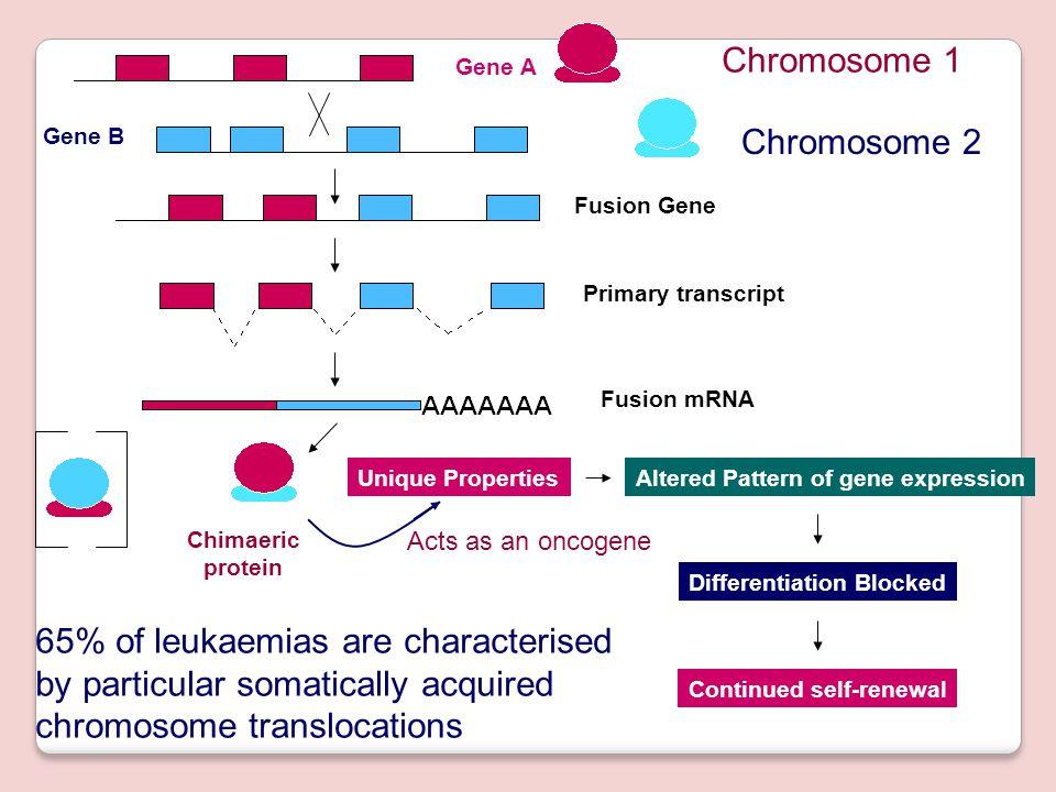 65% of leukaemias are characterised