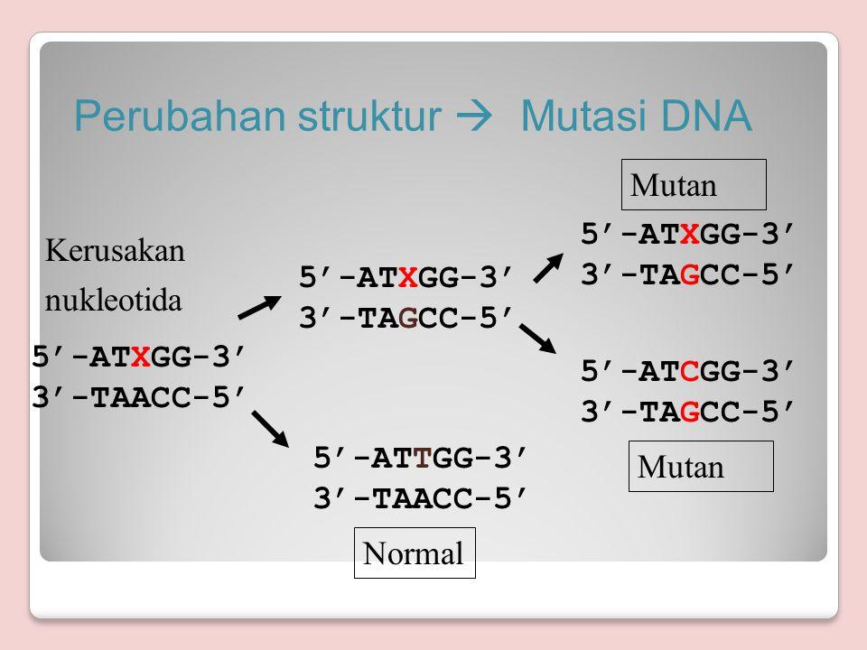 Perubahan struktur  Mutasi DNA