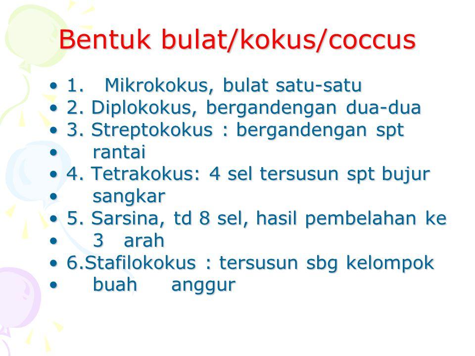 Bentuk bulat/kokus/coccus