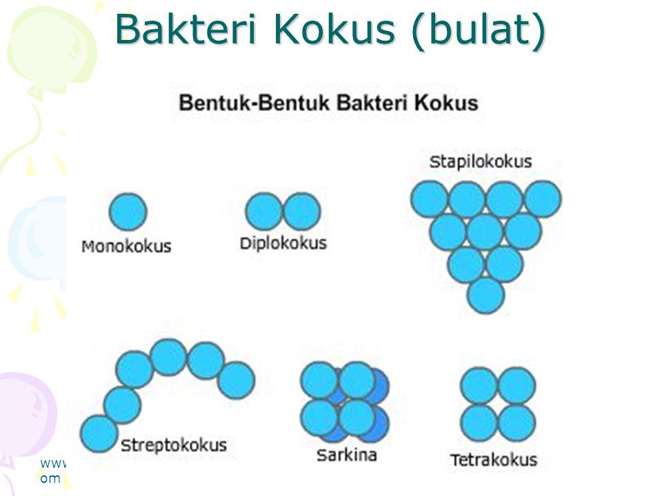 Bakteri Kokus (bulat) www.thmemgallery.com Company Logo