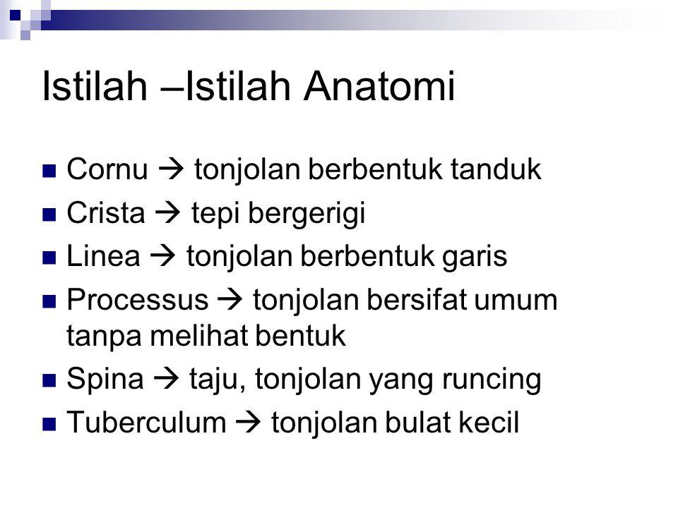 Istilah –Istilah Anatomi