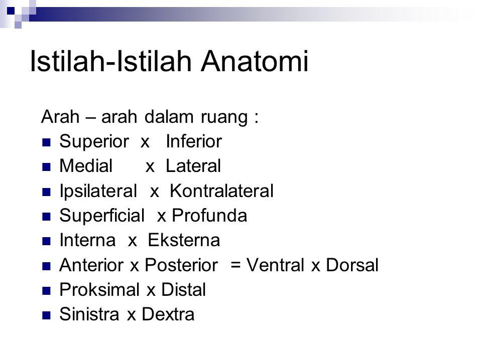 Istilah-Istilah Anatomi