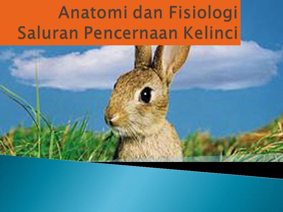 Anatomi dan Fisiologi Saluran Pencernaan Kelinci