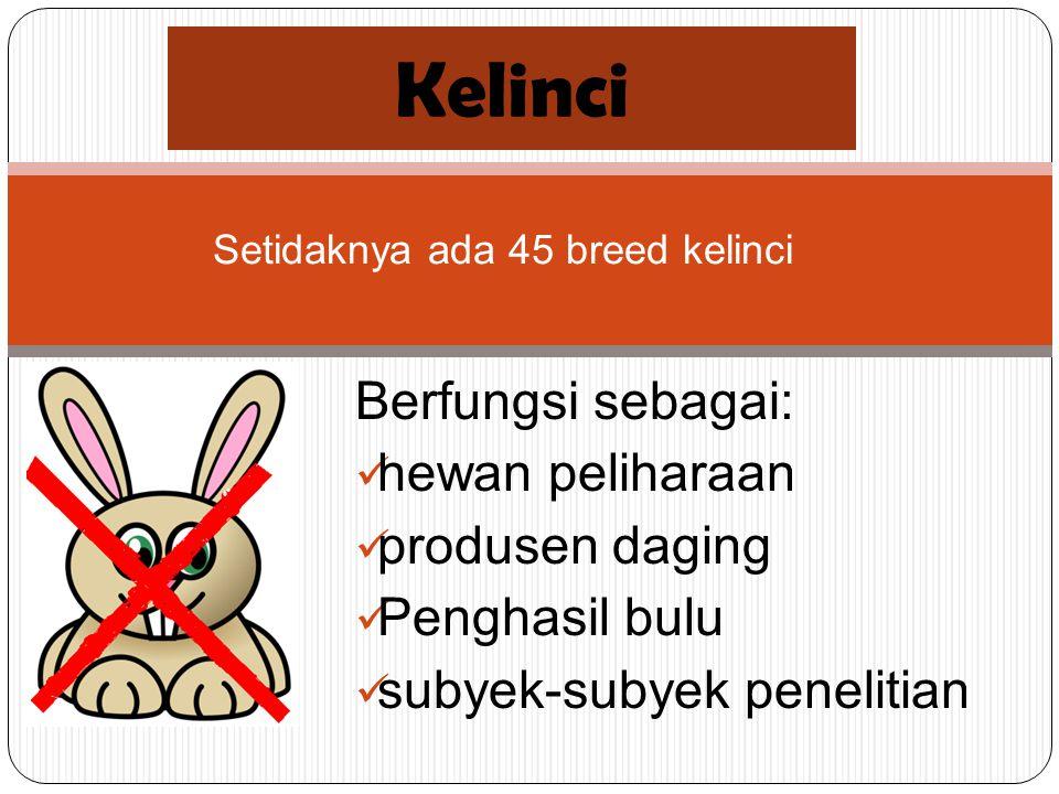 Setidaknya ada 45 breed kelinci