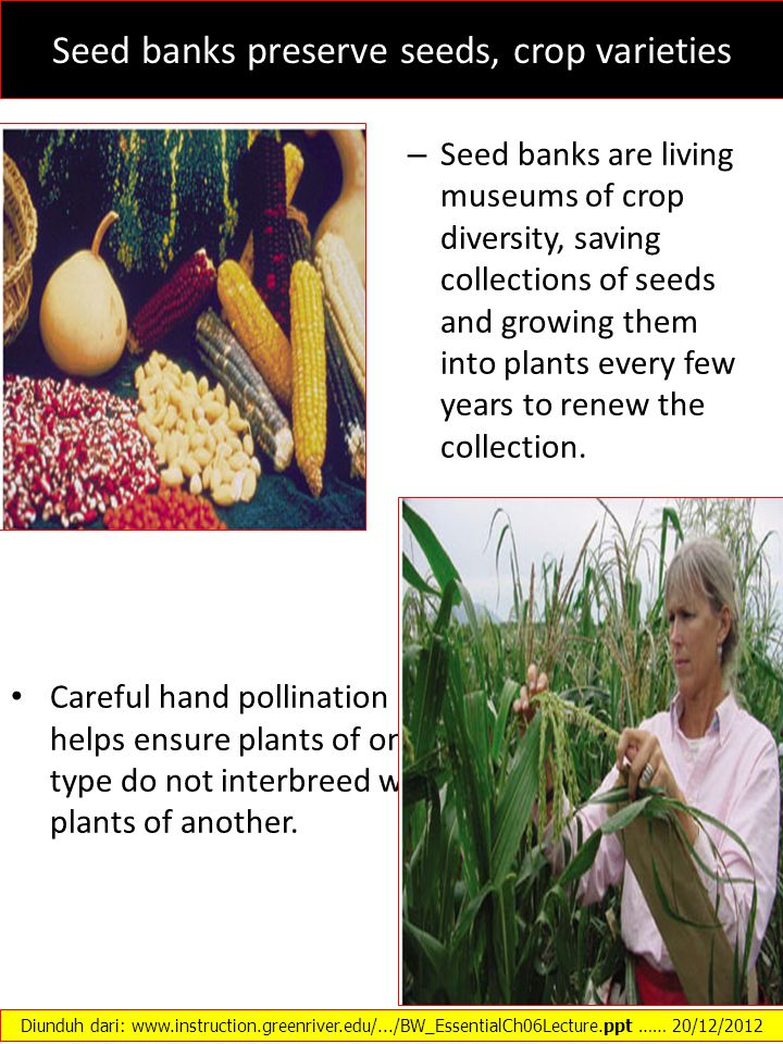 Seed banks preserve seeds, crop varieties