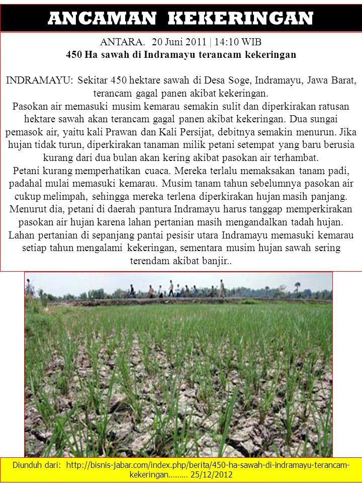 450 Ha sawah di Indramayu terancam kekeringan