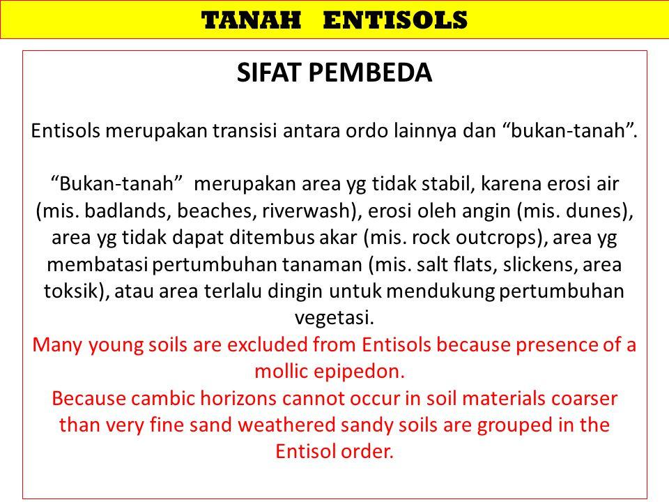 Entisols merupakan transisi antara ordo lainnya dan bukan-tanah .