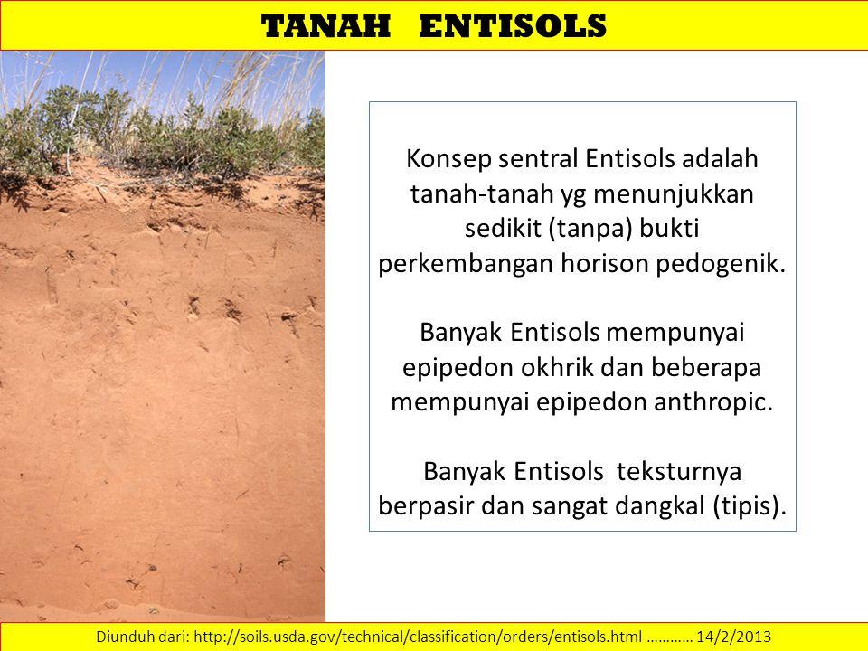 Banyak Entisols teksturnya berpasir dan sangat dangkal (tipis).