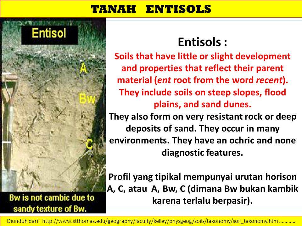 Entisols : TANAH ENTISOLS