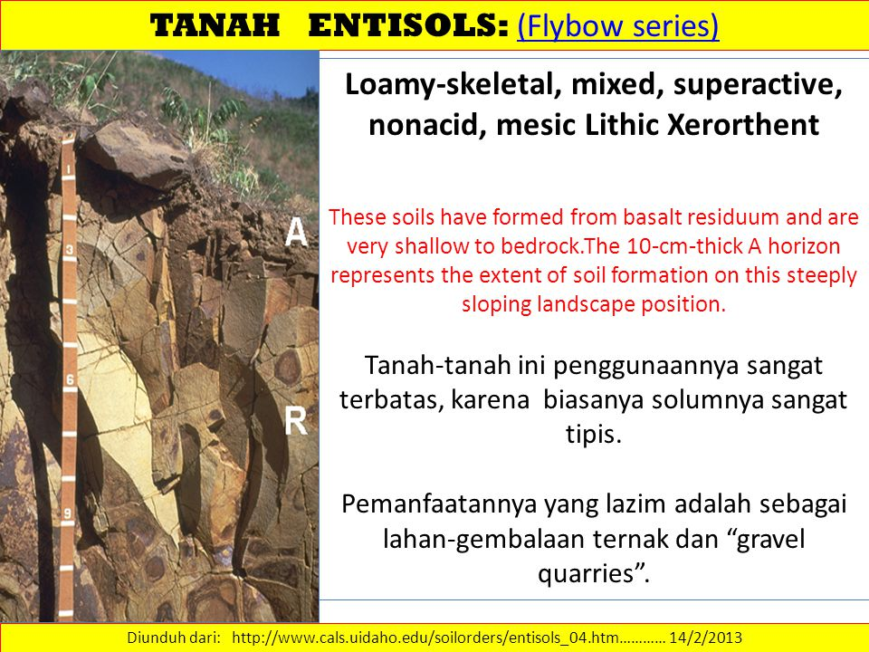 TANAH ENTISOLS: (Flybow series)