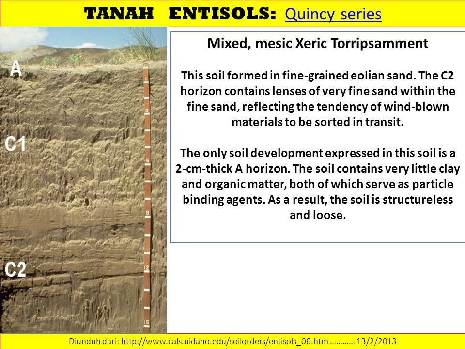 TANAH ENTISOLS: Quincy series