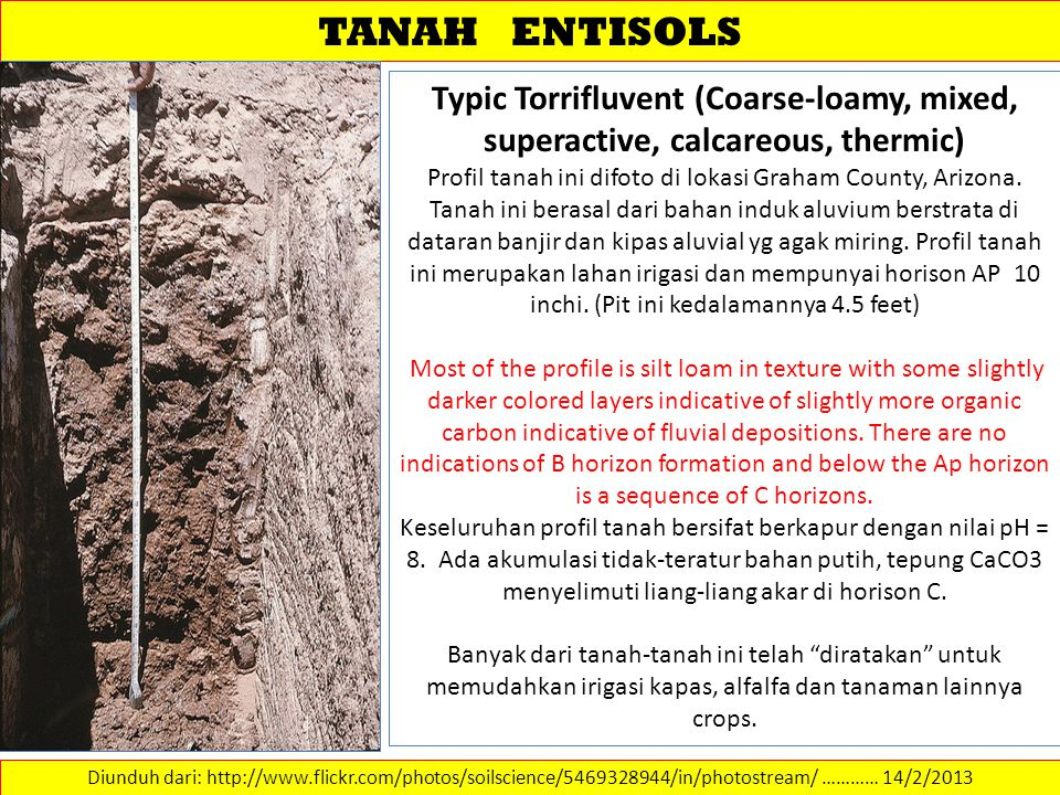 TANAH ENTISOLS Typic Torrifluvent (Coarse-loamy, mixed, superactive, calcareous, thermic)