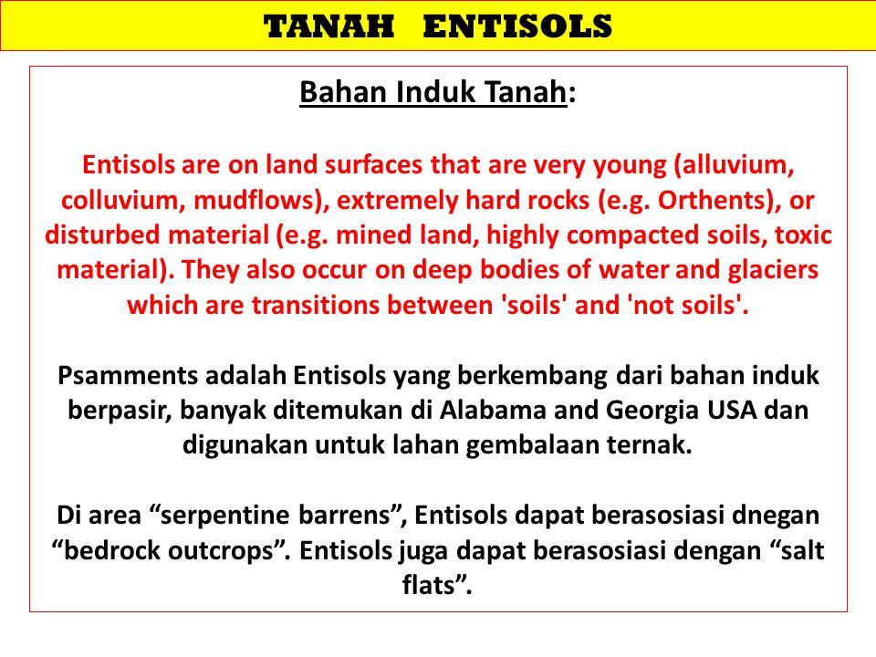 TANAH ENTISOLS Bahan Induk Tanah: