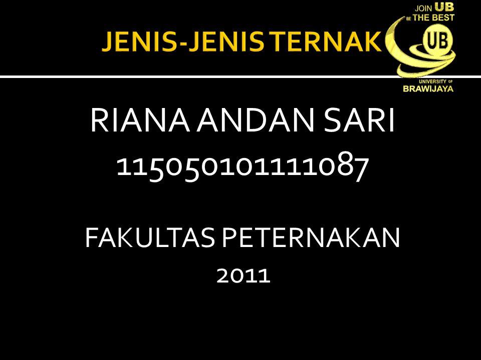 RIANA ANDAN SARI 115050101111087 JENIS-JENIS TERNAK