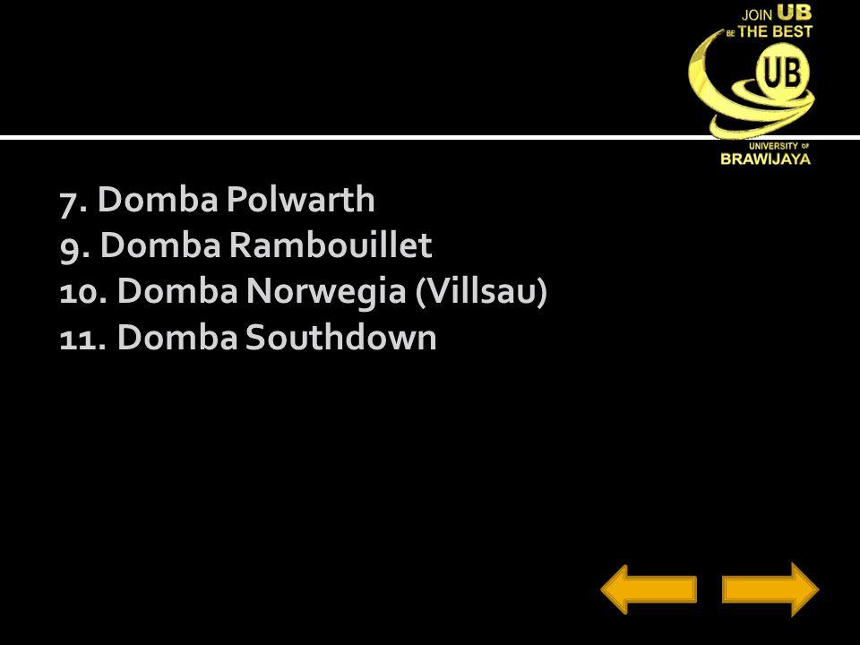 7. Domba Polwarth 9. Domba Rambouillet 10. Domba Norwegia (Villsau) 11. Domba Southdown