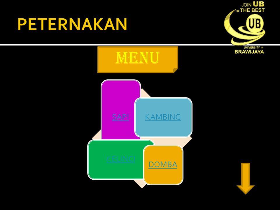 PETERNAKAN menu SAPI KAMBING KELINCI DOMBA