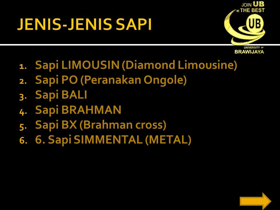 JENIS-JENIS SAPI Sapi LIMOUSIN (Diamond Limousine)