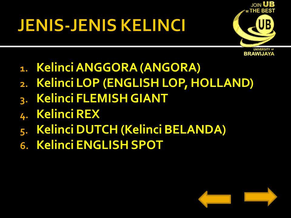 JENIS-JENIS KELINCI Kelinci ANGGORA (ANGORA)
