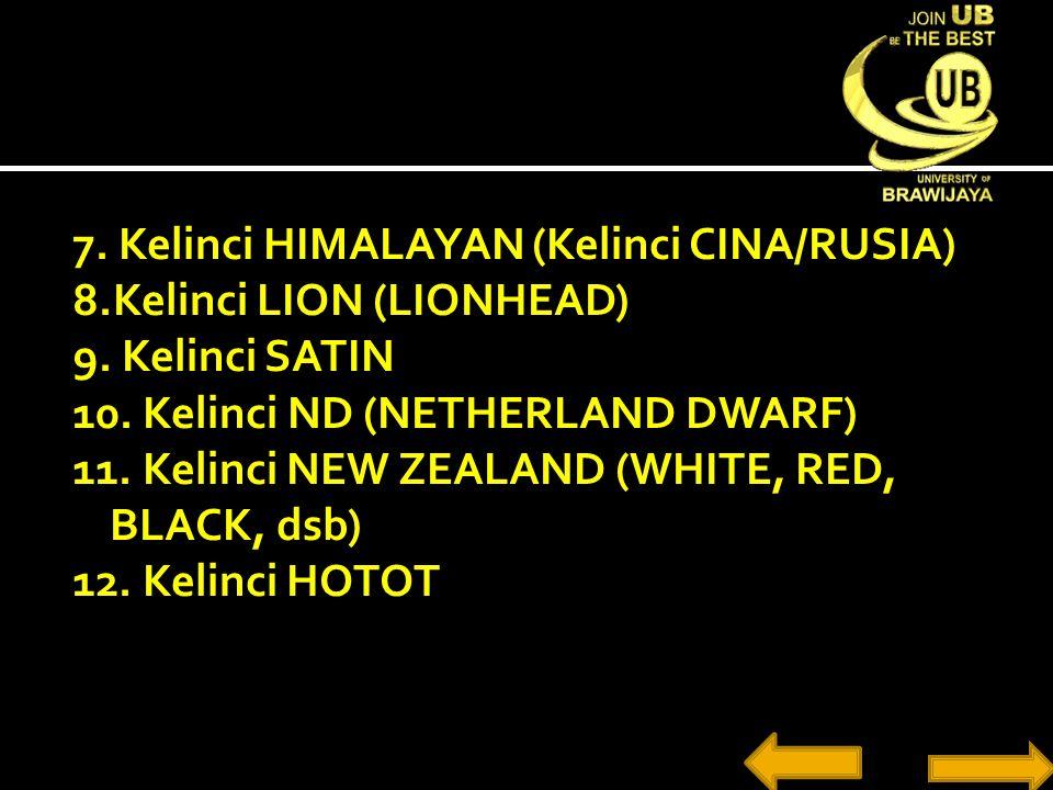 7. Kelinci HIMALAYAN (Kelinci CINA/RUSIA) 8. Kelinci LION (LIONHEAD) 9