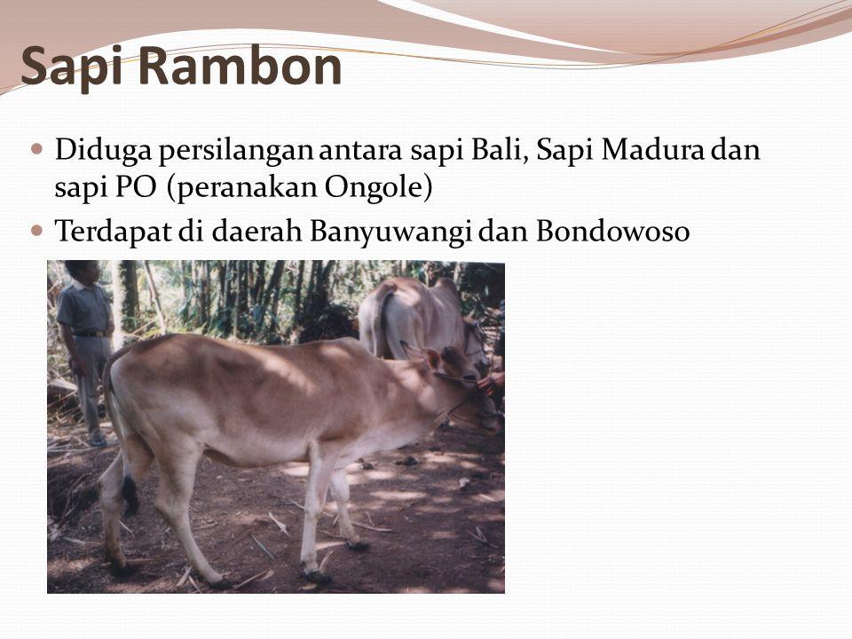 Sapi Rambon Diduga persilangan antara sapi Bali, Sapi Madura dan sapi PO (peranakan Ongole) Terdapat di daerah Banyuwangi dan Bondowoso.