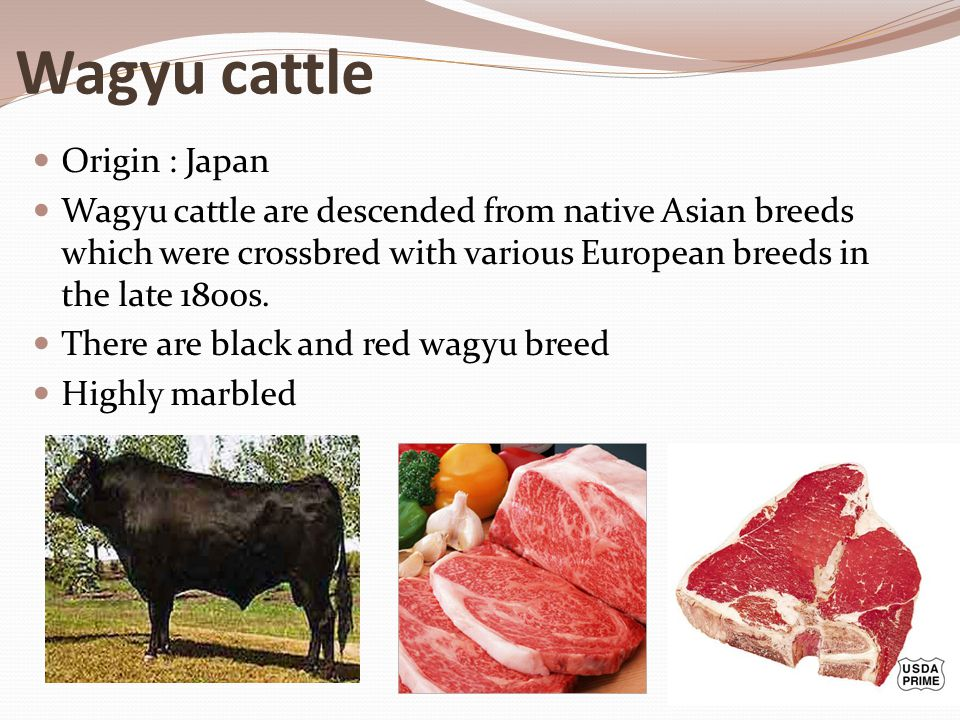 Wagyu cattle Origin : Japan