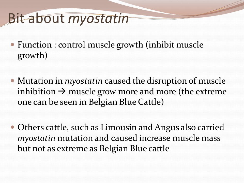 Bit about myostatin Function : control muscle growth (inhibit muscle growth)