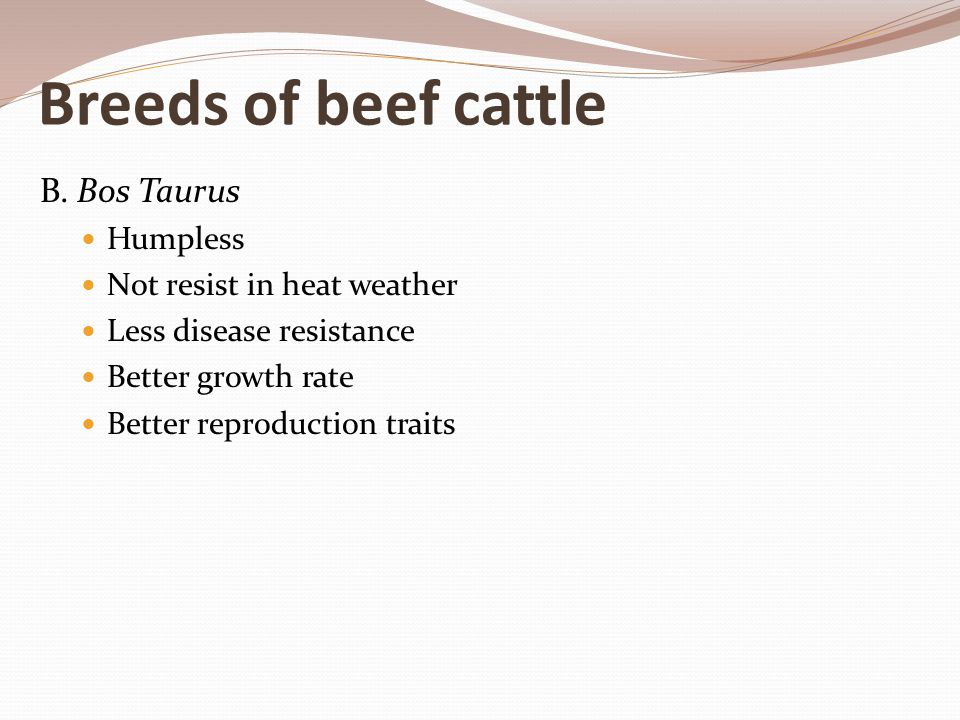 Breeds of beef cattle B. Bos Taurus Humpless