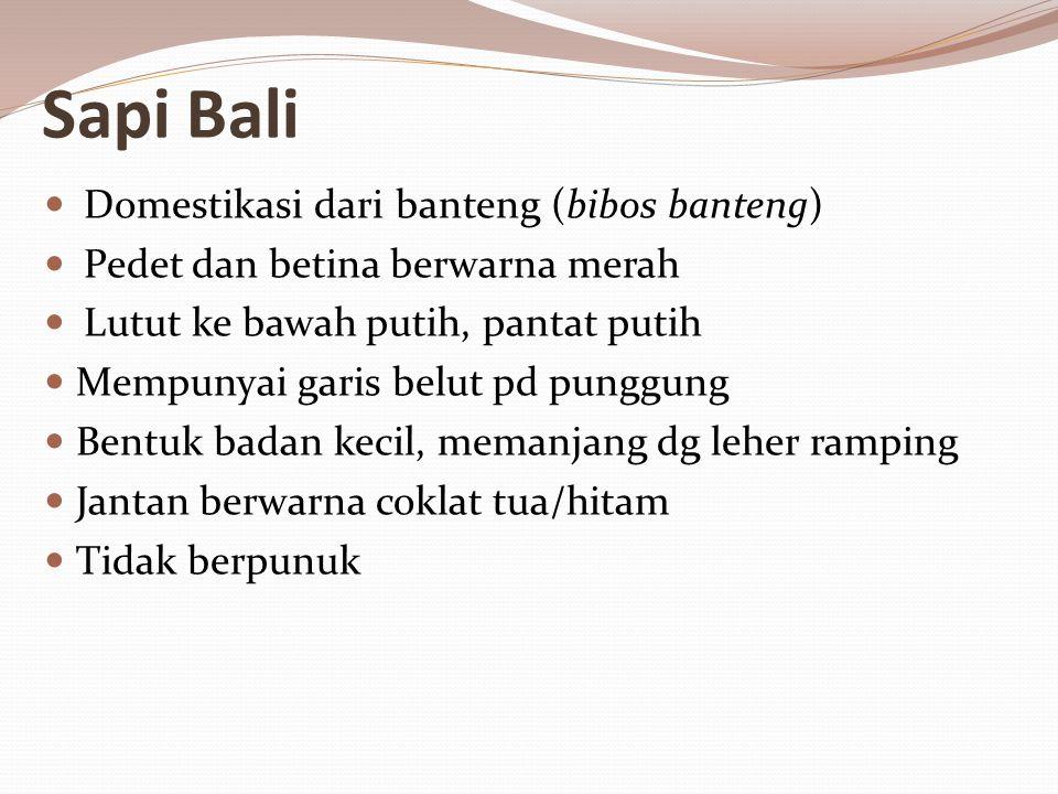 Sapi Bali Domestikasi dari banteng (bibos banteng)