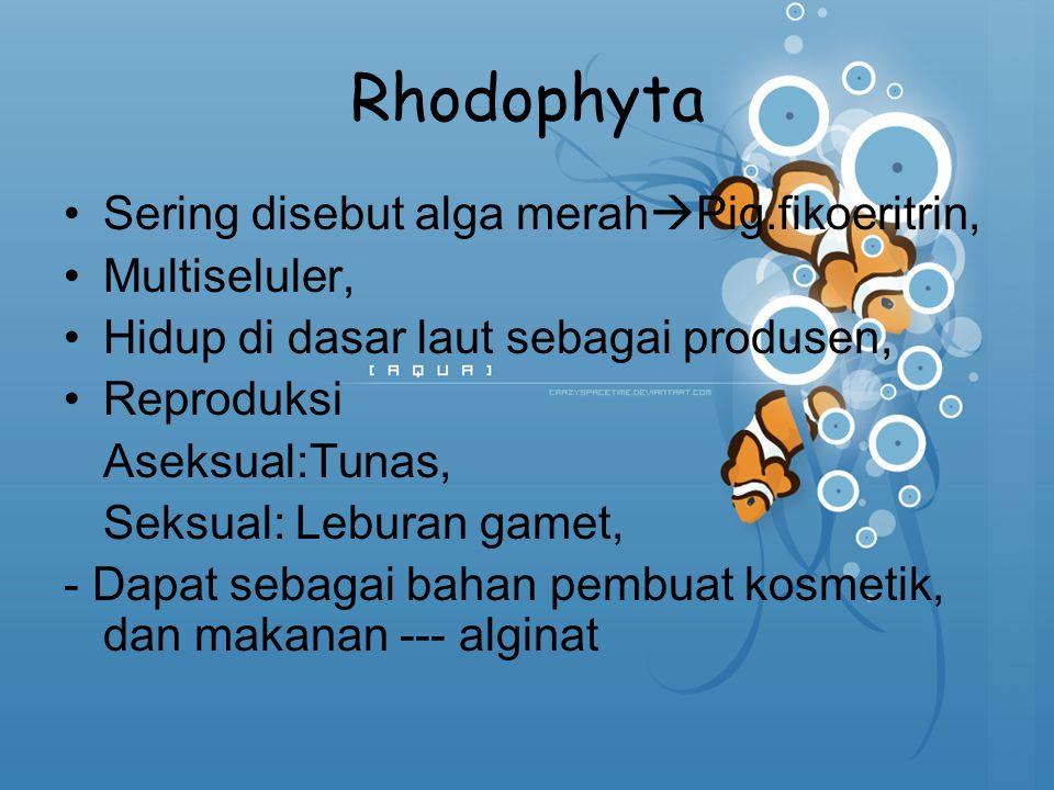Rhodophyta Sering disebut alga merahPig.fikoeritrin, Multiseluler,