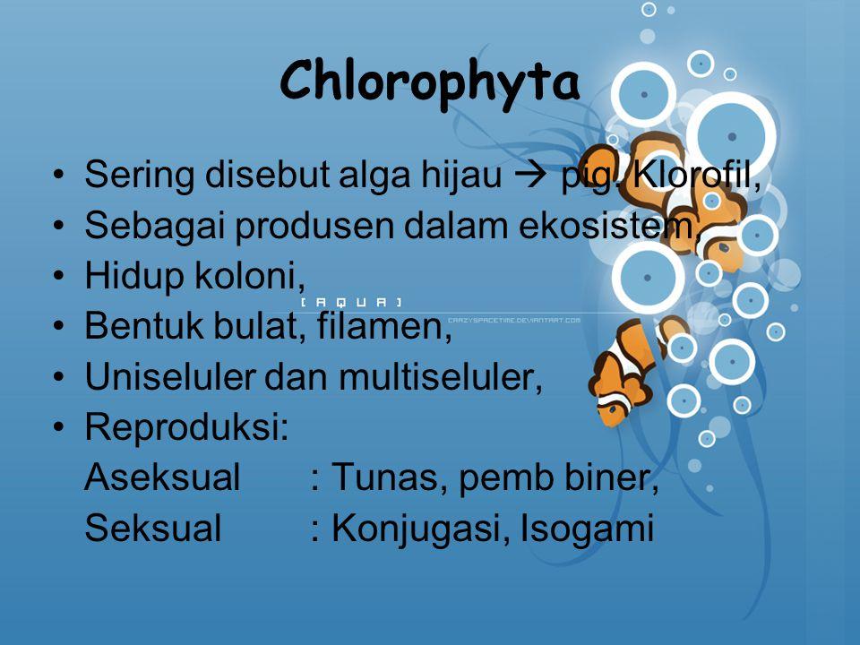 Chlorophyta Sering disebut alga hijau  pig. Klorofil,