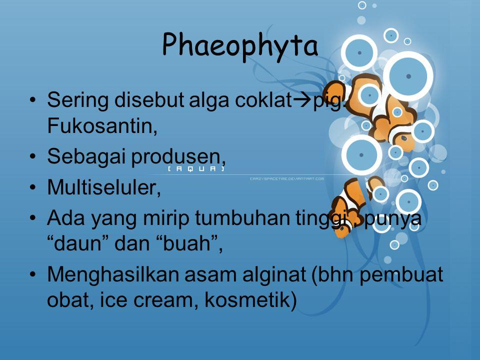 Phaeophyta Sering disebut alga coklatpig. Fukosantin,