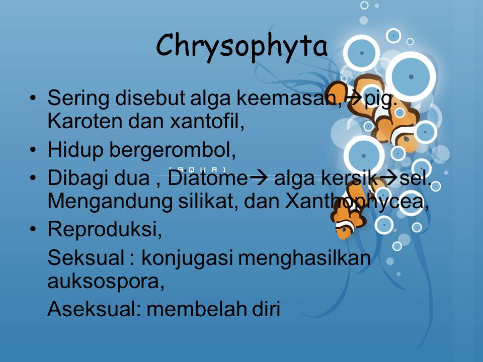 Chrysophyta Sering disebut alga keemasan,pig. Karoten dan xantofil,