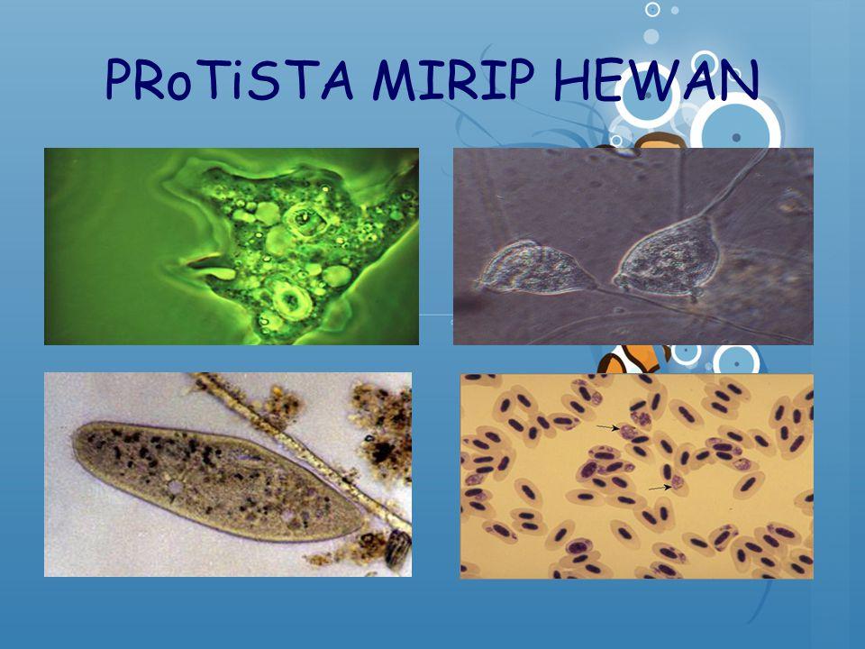 PRoTiSTA MIRIP HEWAN