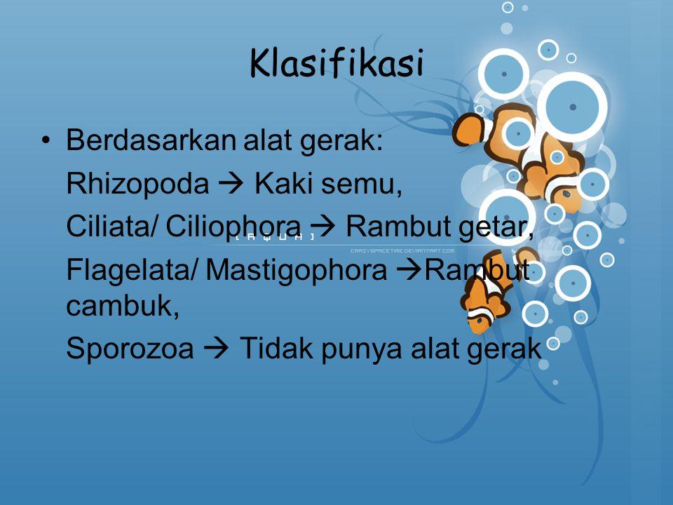Klasifikasi Berdasarkan alat gerak: Rhizopoda  Kaki semu,