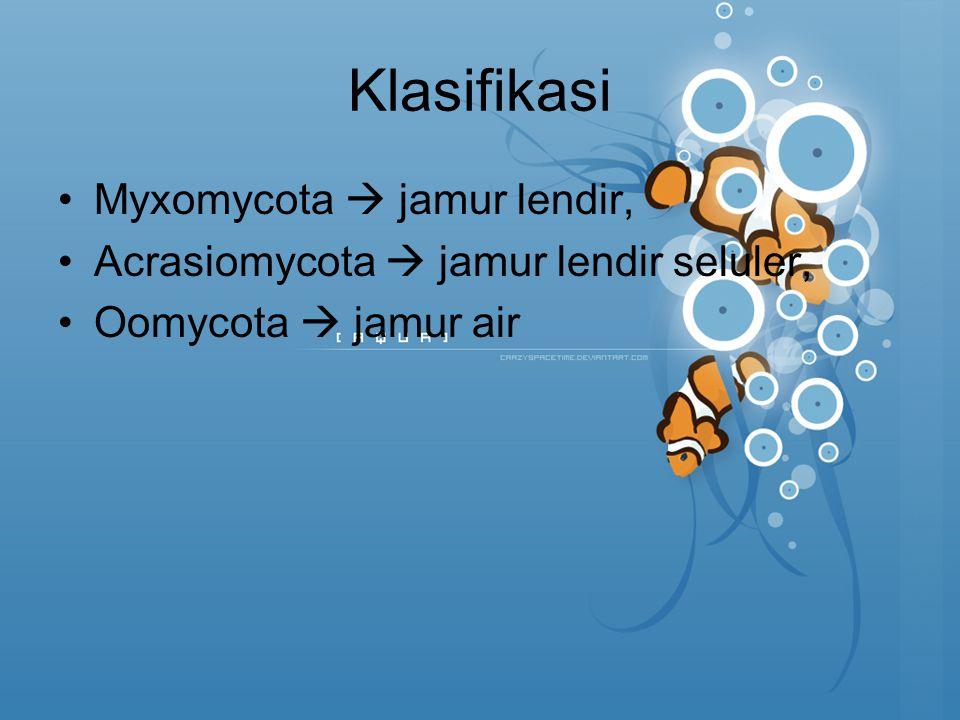 Klasifikasi Myxomycota  jamur lendir,