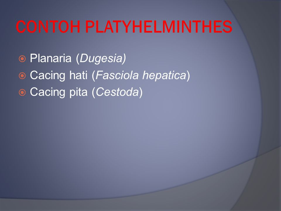 CONTOH PLATYHELMINTHES
