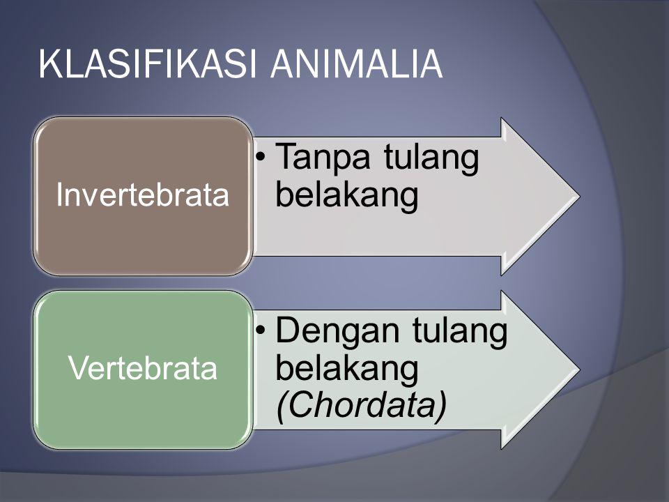 KLASIFIKASI ANIMALIA Invertebrata Tanpa tulang belakang Vertebrata