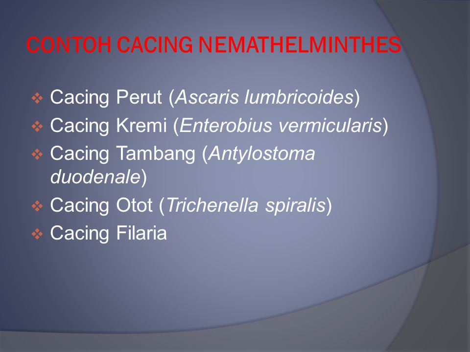 CONTOH CACING NEMATHELMINTHES