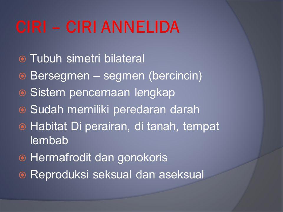 CIRI – CIRI ANNELIDA Tubuh simetri bilateral