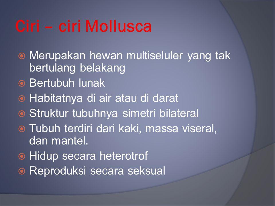Ciri – ciri Mollusca Merupakan hewan multiseluler yang tak bertulang belakang. Bertubuh lunak. Habitatnya di air atau di darat.