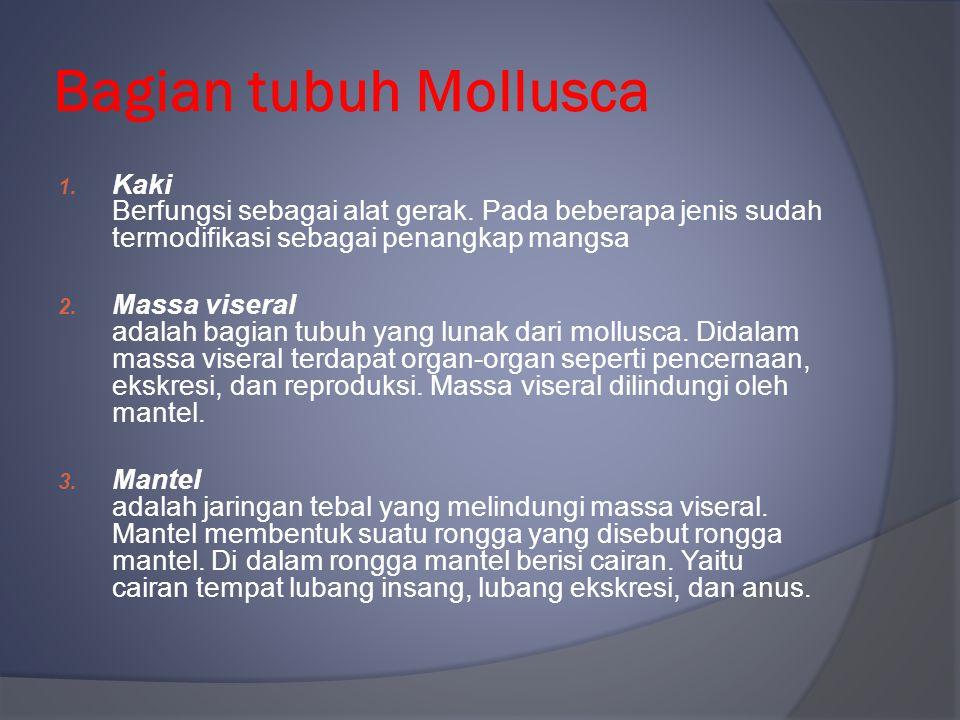 Bagian tubuh Mollusca