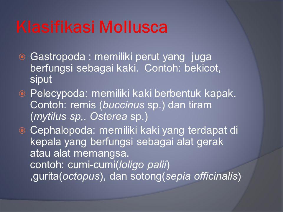 Klasifikasi Mollusca Gastropoda : memiliki perut yang juga berfungsi sebagai kaki. Contoh: bekicot, siput.