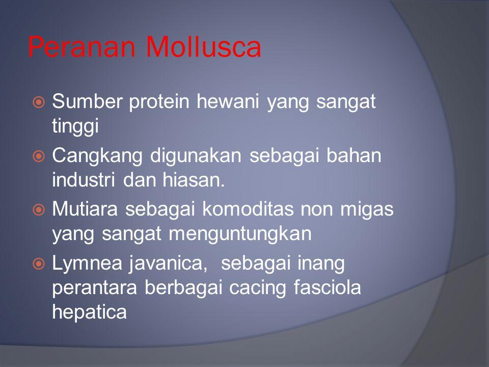 Peranan Mollusca Sumber protein hewani yang sangat tinggi