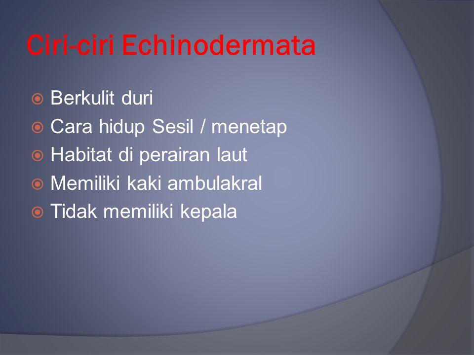Ciri-ciri Echinodermata