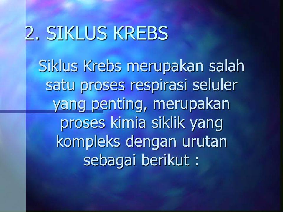 2. SIKLUS KREBS