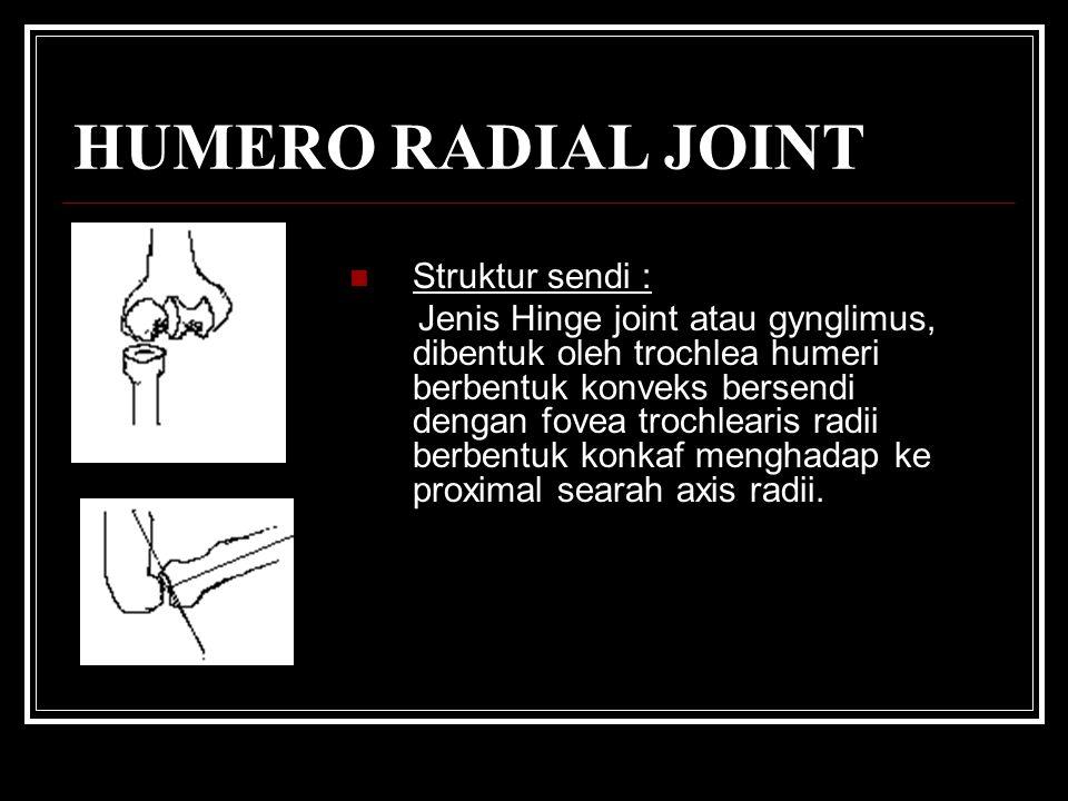 HUMERO RADIAL JOINT Struktur sendi :