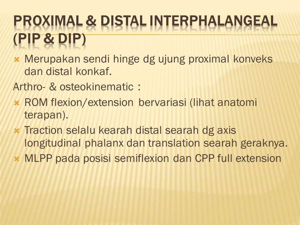 PROXIMAL & DISTAL INTERPHALANGEAL (PIP & DIP)