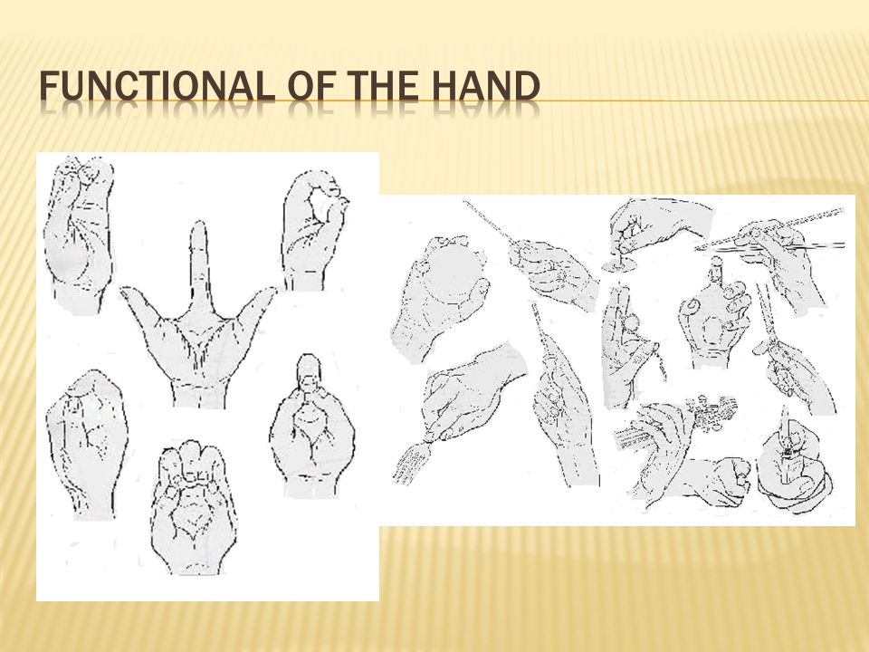 FUNCTIONAL OF THE HAND